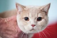 Международная выставка кошек. 16-17 апреля 2016 года, Фото: 35