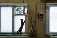 Волонтеры спасли кошек из адской квартиры, Фото: 10