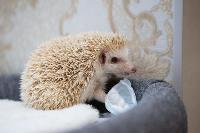 Экзотические животные в квартире, Фото: 31