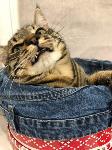 Тульские коты, которых достали хозяева на самоизоляции, Фото: 17