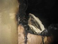 Спаниель спас три семьи от пожара, Фото: 4