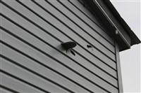 Последствия урагана в Ефремове., Фото: 17