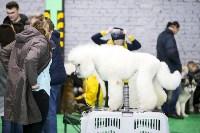 Выставка собак в Туле 14.04.19, Фото: 49