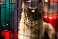 Пряничные кошки, Фото: 3