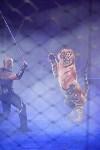 Цирковое шоу, Фото: 99