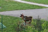 Лось во дворе дома №45 по ул. Плеханова, Фото: 21