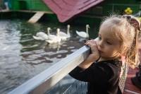 Запуск лебедей в верхний пруд Центрального парка Тулы, Фото: 27