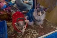 Выставка кошек в ГКЗ. 26 марта 2016 года, Фото: 71