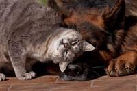 Дружба животных, Фото: 6
