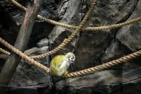 Тульский экзотариум: животные, Фото: 53