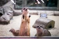 Тульский экзотариум: животные, Фото: 57
