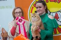 Выставка кошек в Туле, Фото: 66