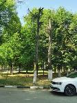 В Туле гибнут деревья, Фото: 63