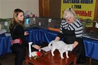 В Туле прошла международная выставка кошек, Фото: 7