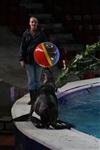 Aqua Show в Тульском цирке, Фото: 20