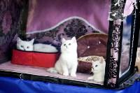 Выставка кошек. 4 и 5 апреля 2015 года в ГКЗ., Фото: 18