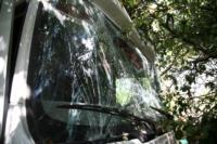 В Барсуках фура влетела в огород и сломала дерево, Фото: 8