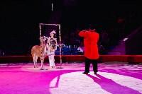 Львы Африки приехали в Тулу, Фото: 58