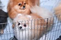Выставка собак в Туле 26.01, Фото: 22