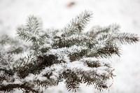 Первый снег, 2.12.2014, Фото: 23