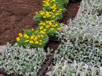 В Кировском сквере Тулы высадят 20 тысяч цветов, Фото: 2