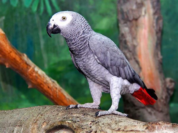 А еще я мечтаю о такой птичке!))