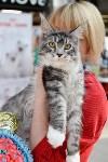 """Выставка """"Пряничные кошки"""" в ТРЦ """"Макси"""", Фото: 106"""