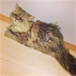 Грустный кот, Фото: 5