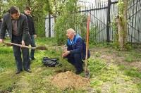 Во дворе Тульского областного краеведческого музея посадили сосны, Фото: 1
