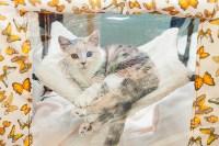Международная выставка кошек. 16-17 апреля 2016 года, Фото: 109