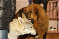 В Туле прошла всероссийская выставка собак, Фото: 52
