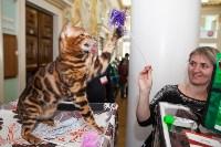 Международная выставка кошек. 16-17 апреля 2016 года, Фото: 105