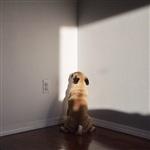 Фотогеничный пес Норм из Сиэтла, Фото: 4