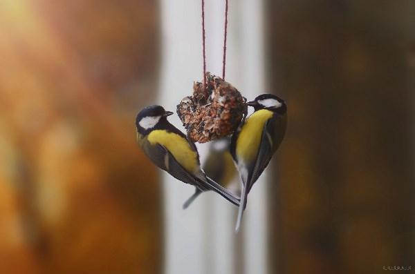 Кормите птичек:)
