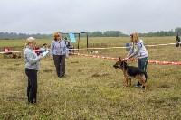 Международная выставка собак, Барсучок. 5.09.2015, Фото: 65