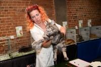 Выставка кошек в Искре, Фото: 49