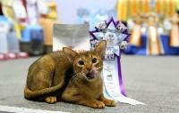 Выставка кошек, Фото: 12