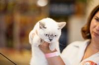 """Выставка """"Пряничные кошки"""". 15-16 августа 2015 года., Фото: 16"""