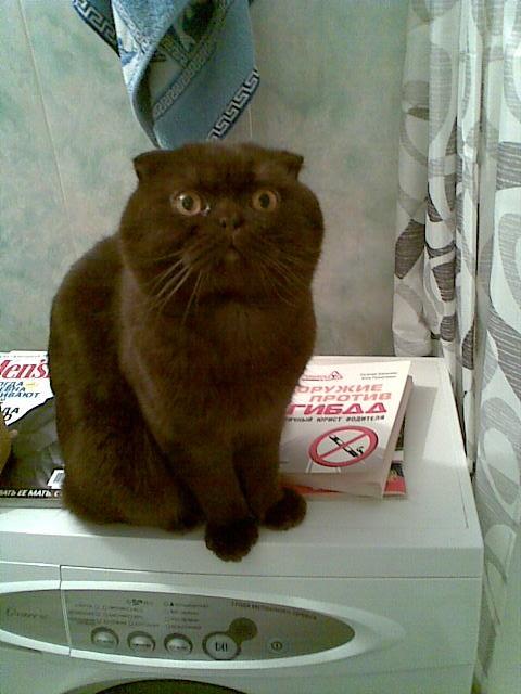 кот Марс