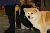 В Туле прошла всероссийская выставка собак, Фото: 41