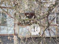 В Туле упавшее на девятиэтажку дерево повредило несколько балконов, Фото: 6