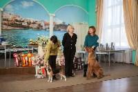 Выставка собак в Туле, 29.11.2015, Фото: 70