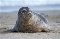 Жизнь тюленя: мечта!, Фото: 6