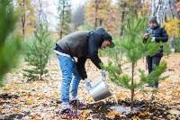 В Центральном парке Тулы появился сосновый бор «Слободы», Фото: 53