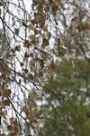 Осень, Фото: 27