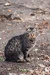 Тульские котики, Фото: 65