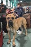 Выставка собак в Туле 26.01, Фото: 56