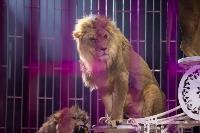 Шоу фонтанов «13 месяцев»: успей увидеть уникальную программу в Тульском цирке, Фото: 196