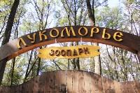В Новомосковске открылся мини-зоопарк, Фото: 1