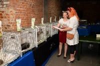 Выставка кошек в Искре, Фото: 40